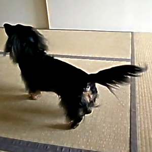 Advantages of Blind Dogs 2 - Great Power of Concentration