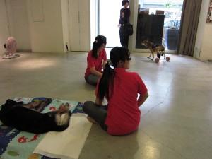 Visit to 寶貝狗協會 Precious Dogs Association (Taipei, Taiwan)