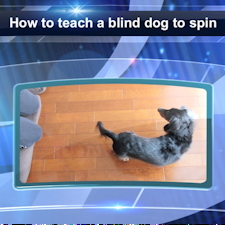 "How to Teach Trick ""Spin"" to a Blind Dog"