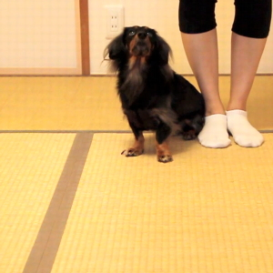 "Blind Dogs can ""Go into the Heel Position"" !"